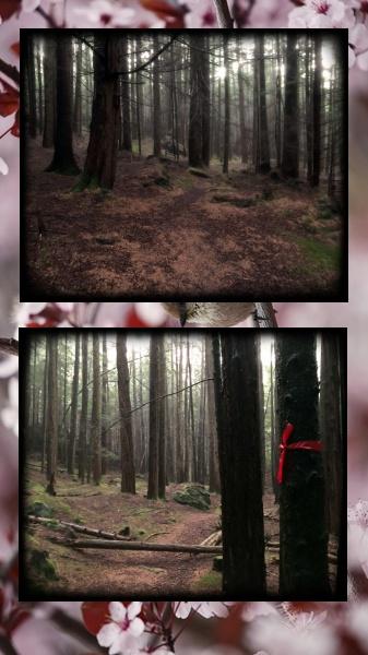 Den store mørke granskogen